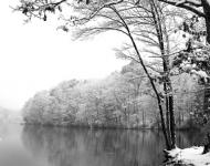 5x7-75-thetrees-in-winter-ice-lakes-rice-twp-effc27cb8a99e0aea2cf480e04672bb88c57ebca