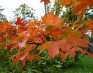 autumn-leaves-hillside-farm75-79d4cb4716964ddae5203022743773d73f6afcb8