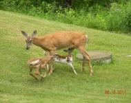 deer2-006-8eedc6869bf7e6318b85c1119efbb7b201f25b9f