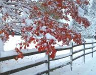 november-snow-1-6caf681ad0ca77c7e31dcd778d8a68a294a0e93a