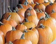 piles-of-pumpkins-org-c_0078-cc6c0dab0aaaf5821c69df0b7b1824236717bb52
