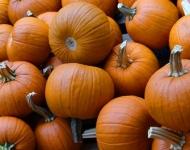 pumpkins-hillside-farm75-82da29a083a98dbc4c4422cc3ac6c5b6b39f42af