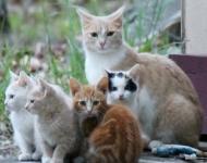 cat-family-cc58460bbe52273a9d9f6505c2e612836aa41c74