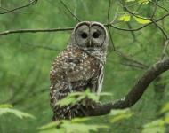 owl-19may2016-10a-aa9f29fcdeb128495afee029d16c734cf8fd7ecb