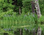 blue-flag-reflection-0859-8-x-10-dfd727ba2ecb9fafc9100a55be9b648bdf4227d0