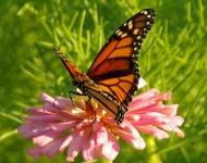 butterfly-flower-2-24b4200c6e62a29dc7785bf0884e9856c60a8d35
