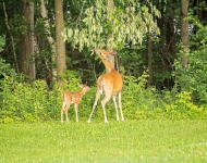 contest-deer-1-33bf45b9e8d9204b18bd80e1e7cbc8e5d8e9f4b2