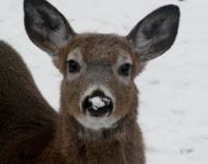 deer-2014-066-bc197d6b4547379d2d02193b15eae0d1d8fa1c42