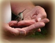 hummingbird-thankyou-d0d86be91966df04111370757e0e2f40baa86322
