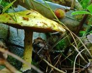 mushroom-be7d5a2f42f841d0230a007b7e416a8f78630742