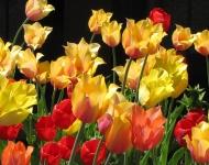 springtime-at-settlers-inn-43cc24f74a6c4b314dd2ceadef1a02414e22daa4