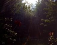 the-nest-in-summer-a205901726c47e9f5b3a1b0296d19f83b38eee4d