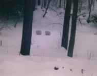 the-nest-in-winter-bda58e689f229af28940d2f894fa13ed30e36ff0