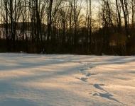 winter-1-6a390dfc385d581bb9a19f200a5699a3fa6d0129